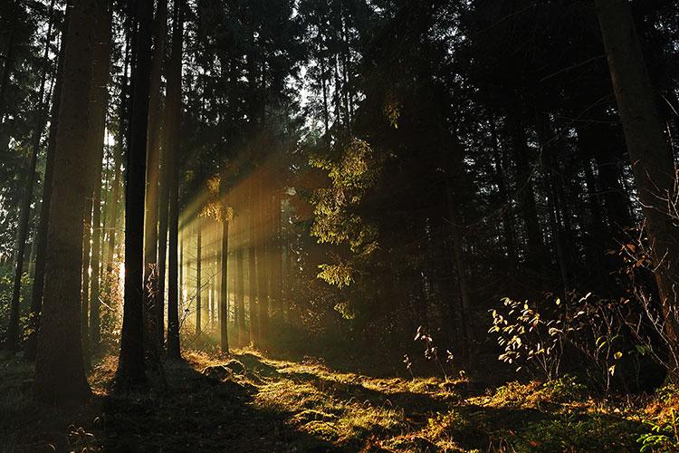 naturallight